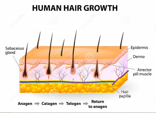 how to regrow hair 2