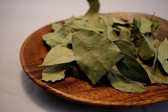Bay leaves for mice2