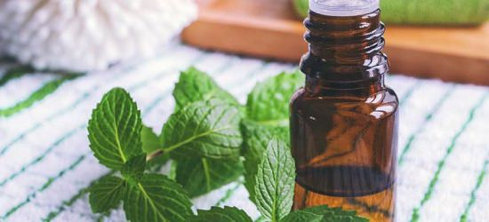 Peppermint oil for mouse