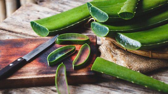 Aloe Vera For Skin During Pregnancy1