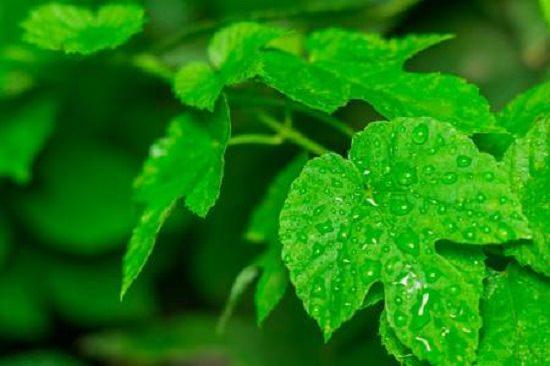 Baking Soda Paste For Poison Ivy Rash 1