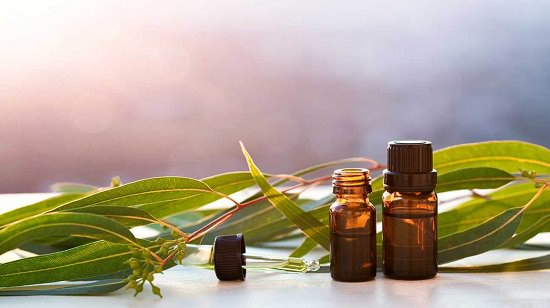 Benefits of Eucalyptus Oil For Hair And Skin3