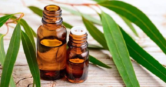 Uses of Eucalyptus Oil