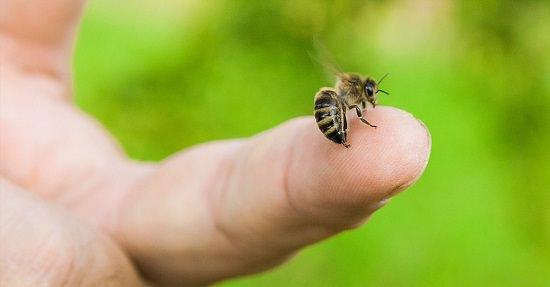 Epsom Salt for Bee Sting2