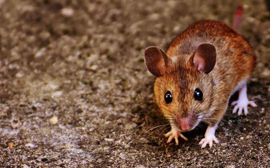 Do Bay Leaves Repel Mice2
