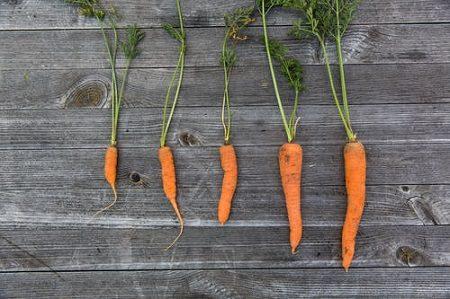 Carrot and Lemon Juice for Skin1