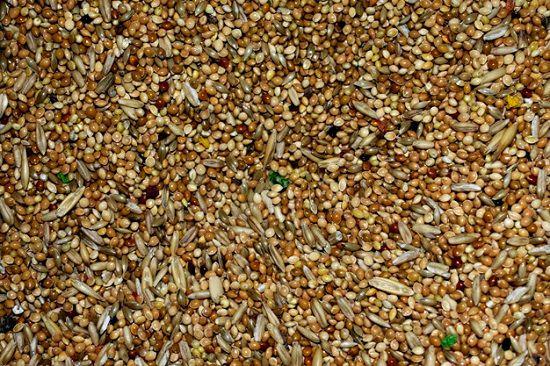 Alpiste Canary Seed Health Benefits1