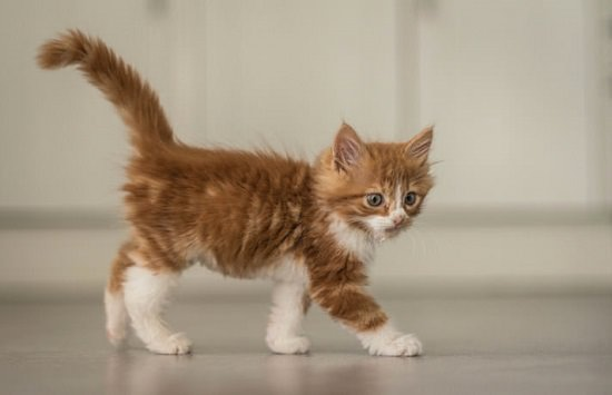 Home Remedies for Constipation in Kittens1