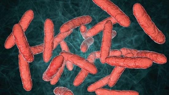 Probiotics for Immunity