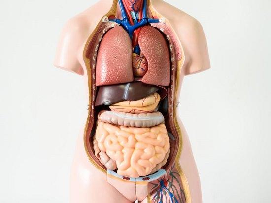 Organ Health and Anesthesia